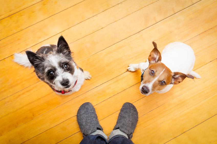 Simple tips for organizing your pet supplies
